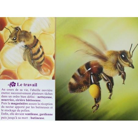 Abeilles jeu cartes : 7 Familles le mondes des abeilles
